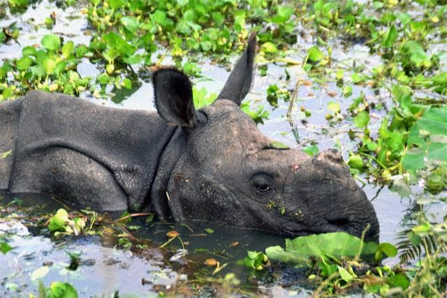 Some risk-reduction measures if planned in advance can contain the risk to the lives of people and the rare one-horned rhinoceros, which are facing the double risk of poachers and drowning, if not taken to higher and safer shelters during monsoon.