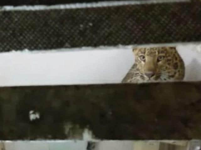 Leopard enters hotel
