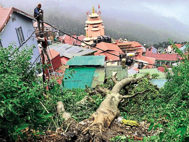 An uprooted tree due to heavy rainfall damaged the power line which interrupted the power supply in the area of Ram bazaar near SD School, Shimla on Sunday.