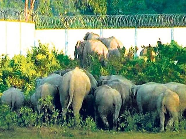 The Tamil Nadu forest department has decided to build underpasses for elephants between Madukkarai and Walayar near the Kerala border.