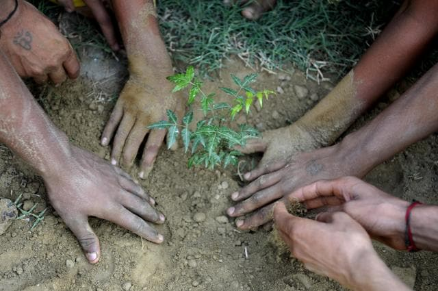 This time around, more native varieties of saplings will be planted and the authorities are planning to put in place a proper mechanism for their maintenance.