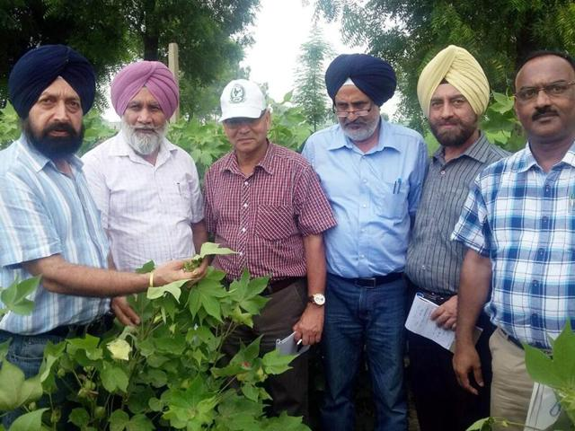 A central team of experts inspecting cotton crop at a field in Bathinda on Tuesday.