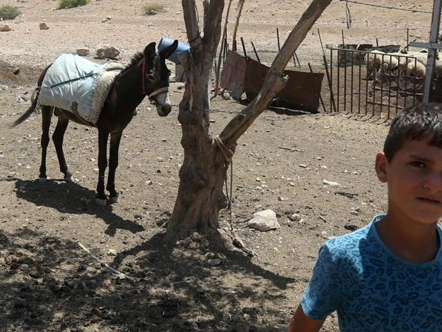 "A Palestinian boy poses next to a donkey in the Israeli-occupied West Bank area of Tubas. A new Israeli law proposes jailing children as young as 12 convicted of ""terrorist offences""."
