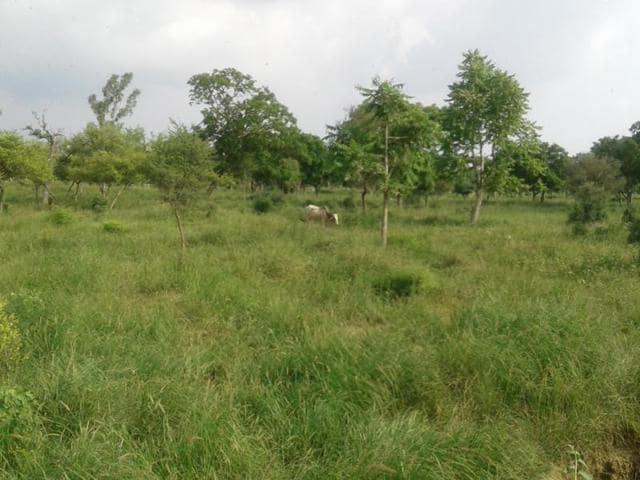 Bir Gurdialpura,wildlife sanctuary,Vaninder Kaur Loomba