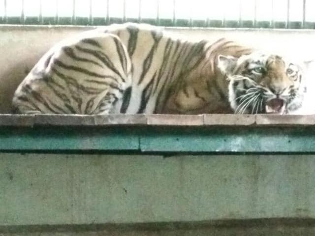 5 stories,Mumbai,tigresses