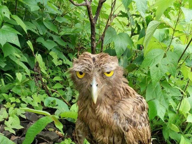 If Monday was an owl