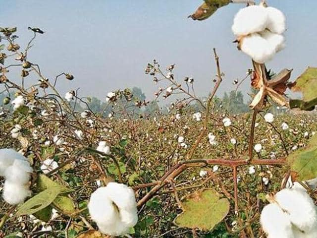 Referring to ploughing up of cotton fields, he said that there were many factors responsible for the same like fear among farmers due to last year's attack.