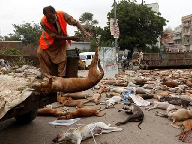 A municipal worker unloads the bodies of stray dogs from a garbage truck after they were culled using poison by the municipality in Karachi on Thursday.