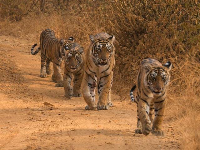 Tiger database