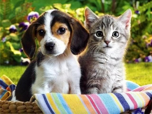 Researchers at Facebook studied 160,000 profiles on the social networking website of users in the US who shared photos of cats, dogs or both and found cat people to be sad and lonely.