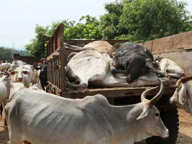 According to police, a farmer engaged the two Dalits brothers for skinning a cow, which died due to electrocution. Villagers spotted the Dalits skinning the animal and beat them up, suspecting they had killed it.