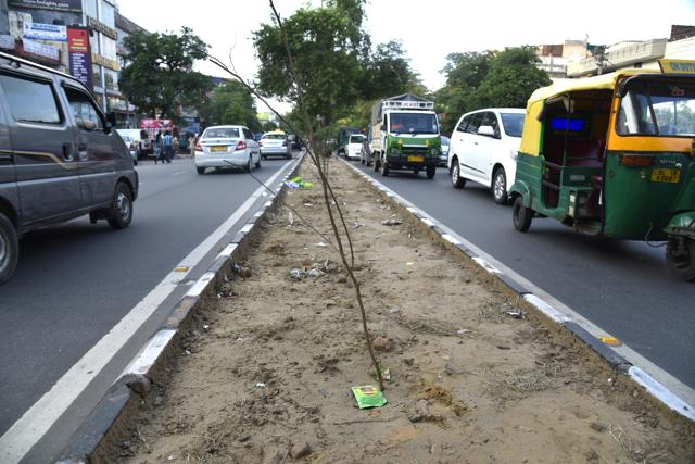 There is no gap in the median or a proper way to cross the road. Thus, most people end up trampling the plant while crossing.