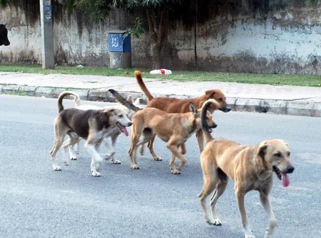 Stray dogs at Sector 20, Panchkula.