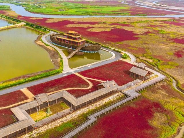 The Red Beach of Panjin is located in Liaoning, a northeastern Chinese province.