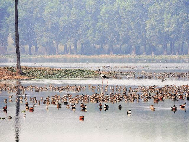 Environmentalist Vikram Tongad said that failure to protect the six wetlands will lead to the Surajpur wetland becoming dry in the future.