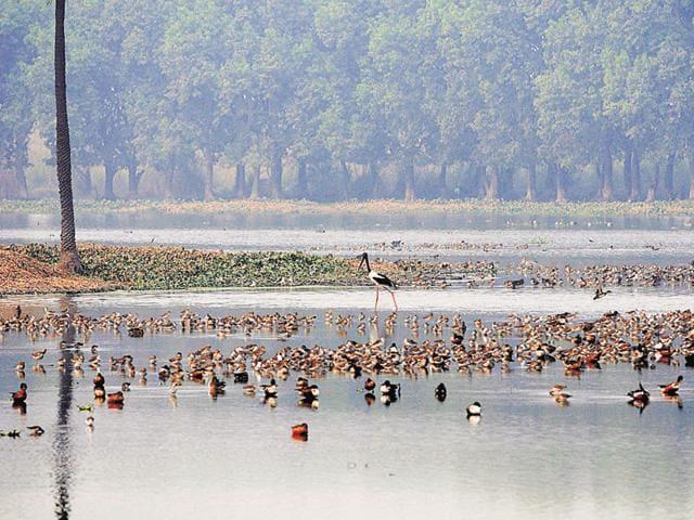 Noida,wetland,Surajpur