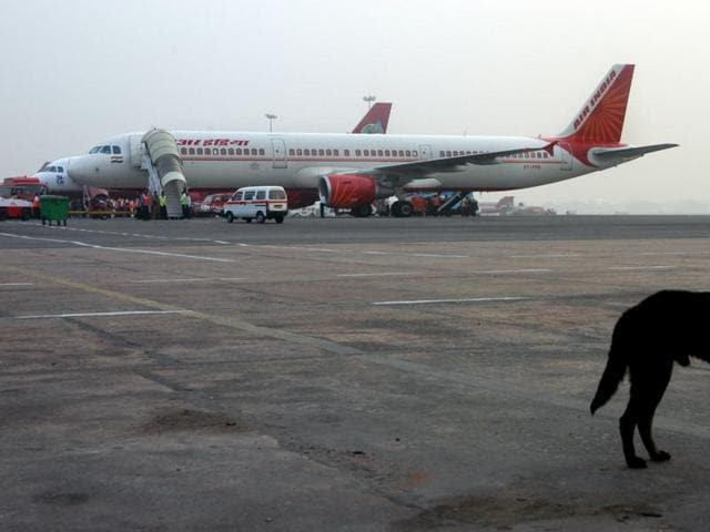 A stray dog on the Palam airport runway in New Delhi on Tuesday. The airport regulator  says strays could be used in terror attacks.