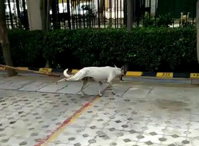 The complainant  submitted a video footage of the incident, which took place on Tuesday, based on which the police registered anFIR on Friday. The RWA members of Wembley Estate have been booked under IPC 429 (mischief by killing or maiming animal) and section 11 of the Prevention of Cruelty to Animals Act, 1960.