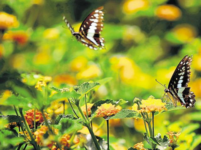 NDMC,documentary,Lodhi Garden
