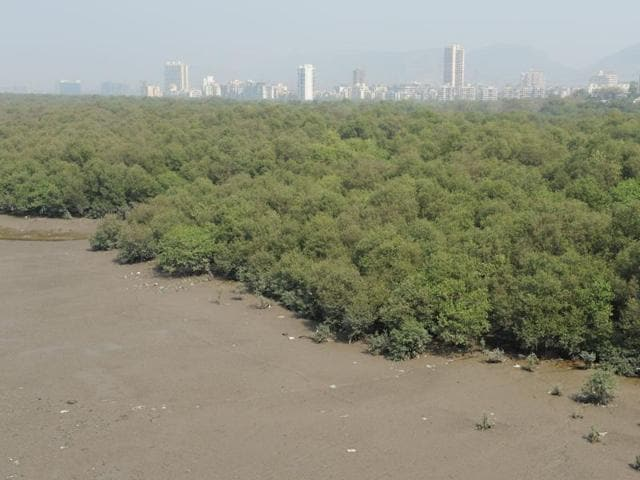 In March 2014, division bench of Justice VM Kanade and Justice Anil Menon impose an interim ban on reclamation and construction in wetland areas across the state.(HT PHOTO)