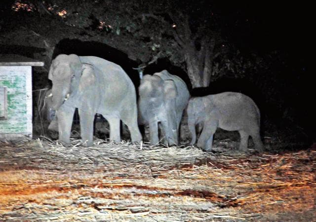 Over 50 people have been killed in elephant attacks since the state's formation in 2000.