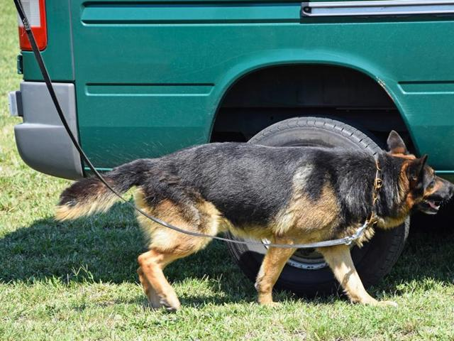 A Dutch police dog has sniffed out a fortune tucked into the trunk of an alleged drug trafficker's car.