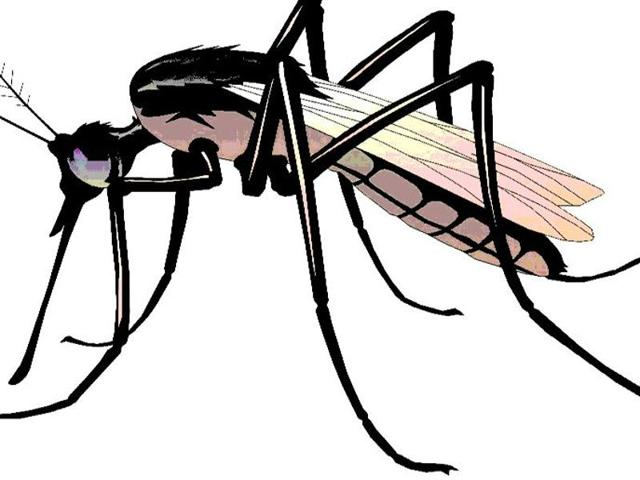 Locating breeding sites of Aedes mosquitoes which transmit the dengue virus is far more challenging than locating breeding spots of Anopheles mosquitoes that transmit the malarial parasite, said civic officials.(HT File Photo)