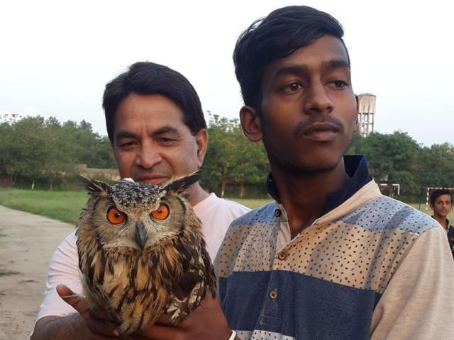 Eagle owl,Karan Kumar,rhythmic sections