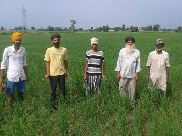 Many paddy farmers in Amritsar and Tarn Taran are worried due to inadequate rains this year.