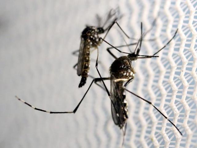 About 300 new cases of dengue were reported in West Bengal taking the total number of infected persons to 4,523 since January.(Reuters file for representation)