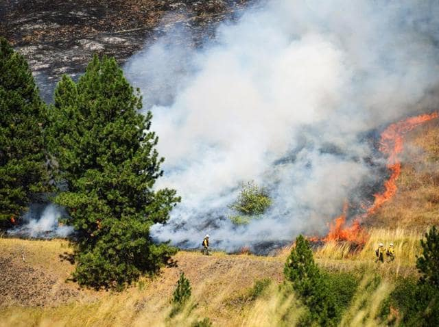Firefighters monitor a burnout fire off of the Old Emigrant Highway, while battling a fast-moving wildfire east of Pendleton, Oregon.