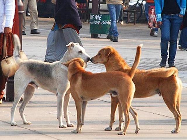 Kerala dog menace