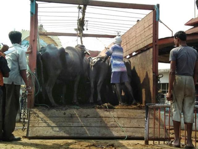 Volunteers of the vigilante group of Gau Raksha Dal  gather to inspect a truck on a highway in Taranagar, Rajasthan.