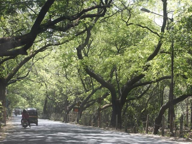 Of the 3,160 acres at Aarey, nearly 729 acres have been given to state government institutions and agencies including Mhada, BMC, fisheries department and Film City.