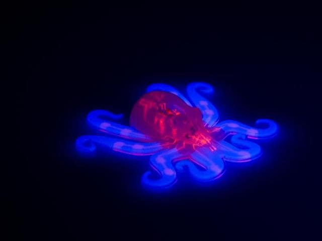 This image provided by Ryan Truby, Michael Wehner, and Lori Sanders, Harvard University, shows the octobot, an entirely soft, autonomous robot. The latest revolutionary robot isn't the hardened costly machine you'd expect: It's squishy like Silly Putty, wireless, without a battery and is made for pennies by a 3-D printer.