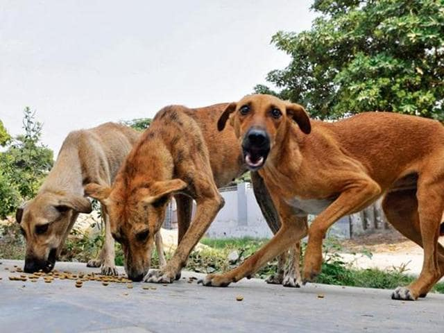 Kerala chief minister Pinarayi Vijayan has directed officials to take urgent steps to catch stray canine with the help of trained dog catchers.