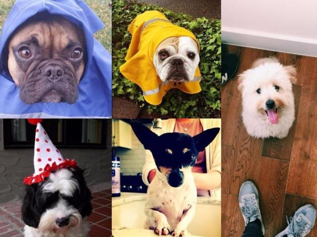 Oi, you. These dogs require your immediate attention. Right now. Because they are all over Instagram this Dog Day.
