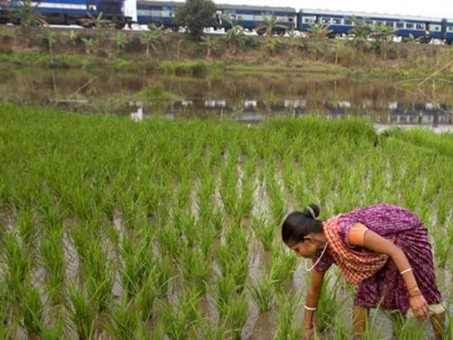Agriculture,Monsoon,Minimum Support Prices