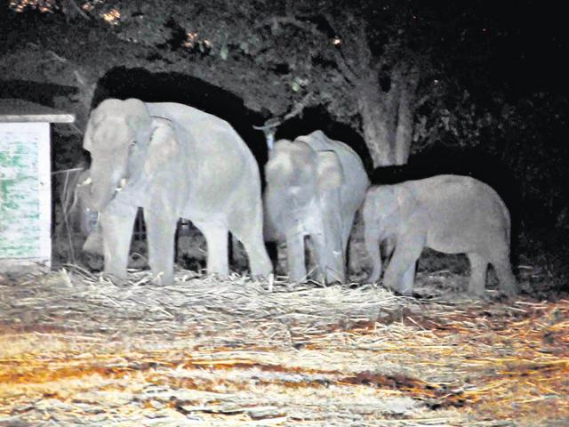 Train runs over elephant,Elephant killed by train,Indian Railways