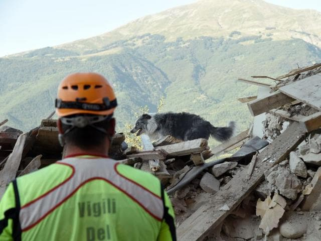 A firefighter looks at a dog searching for victims in the rubble and debris in the damaged central Italian village of Amatrice on August 27, 2016, three days after a 6.2-magnitude earthquake struck the region.