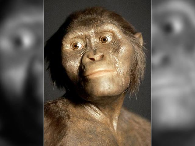 A three-dimensional model of the early human ancestor,