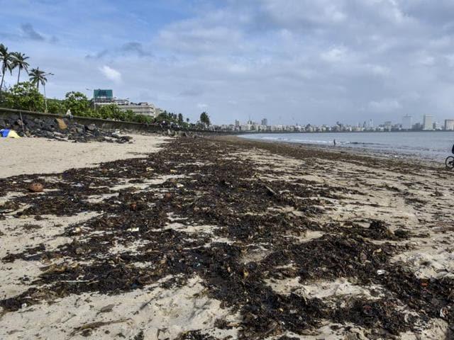 Girgaum chowpatty,mumbai,oil spill