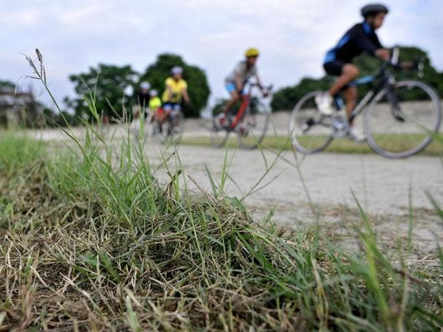 Overgrown grass; and (right) cracks on the track of cycling velodrome on the Punjab Agricultural University campus in Ludhiana.