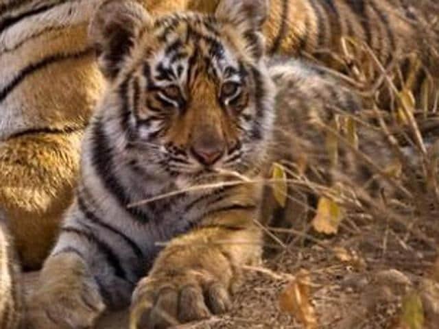 Umred-Karhandla wildlife sanctuary