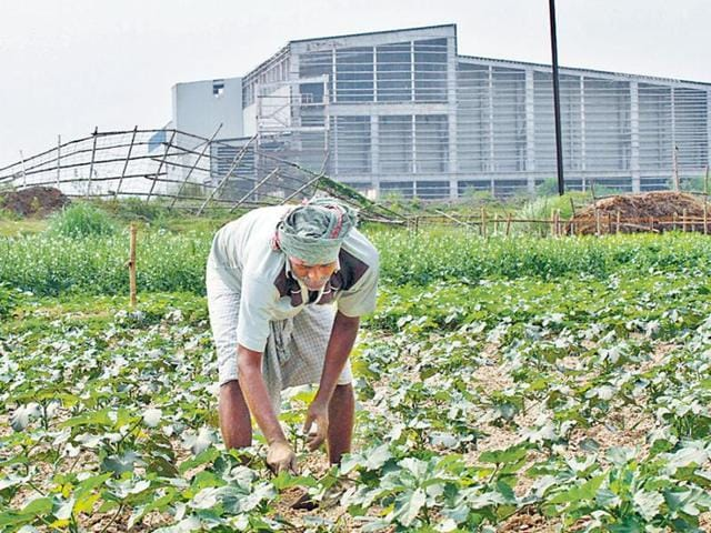 A farmer grows vegetable in a piece of land near the abandoned Nano factory in Singur.The Supreme Court asked the state government on Wednesday to take possession and redistribute the land.