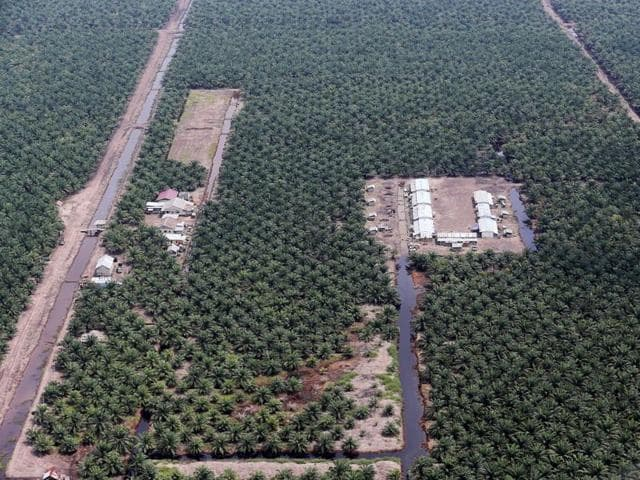 An aerial view of an oil palm plantation in Musi Banyuasin Regency, South Sumatra, Indonesia.