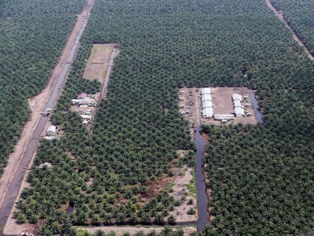 Korindo,Indonesia rainforest,Palm oil plantations