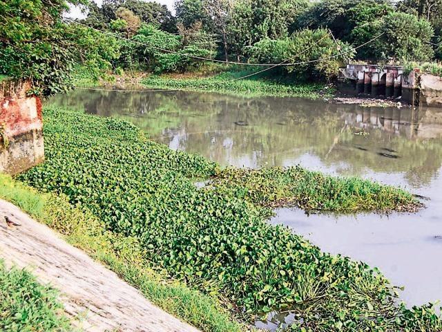 Kanjli wetland,drug addicts,Ramsar Convention