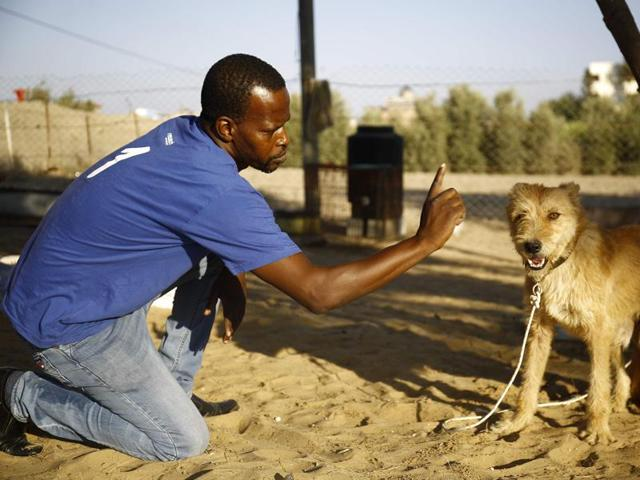 Palestinian Saeed al-Ar, who launched the Al-Soulala Association for Protection, Rehabilitation and Training, works with a blind dog on September 2, 2016 at the association's dog shelter in the Al-Zahra municipality in central Gaza Strip.
