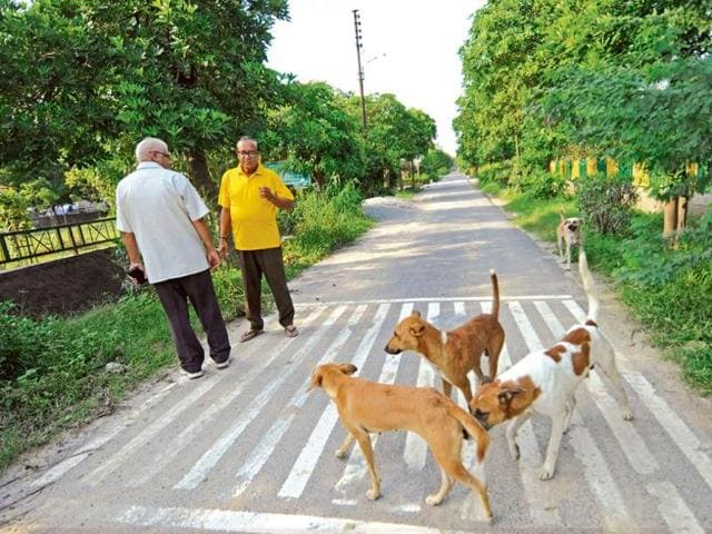 Noida residents say the authority is doing little to control stray dog population.